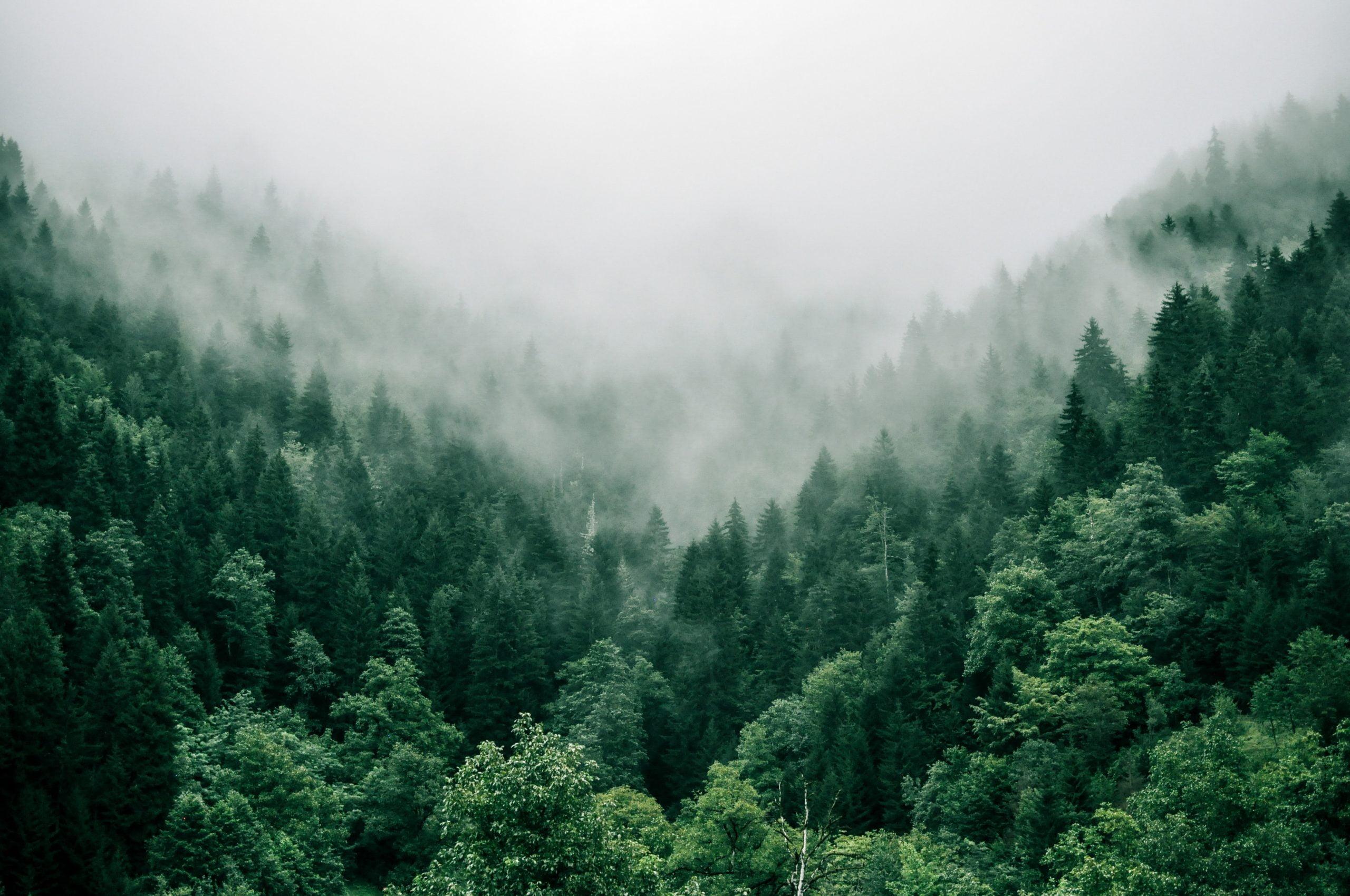 Un paso más: Nos comprometemos este 2021 a destinar el 1% de nuestros beneficios a la reforestación.