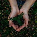 planta sobre manos