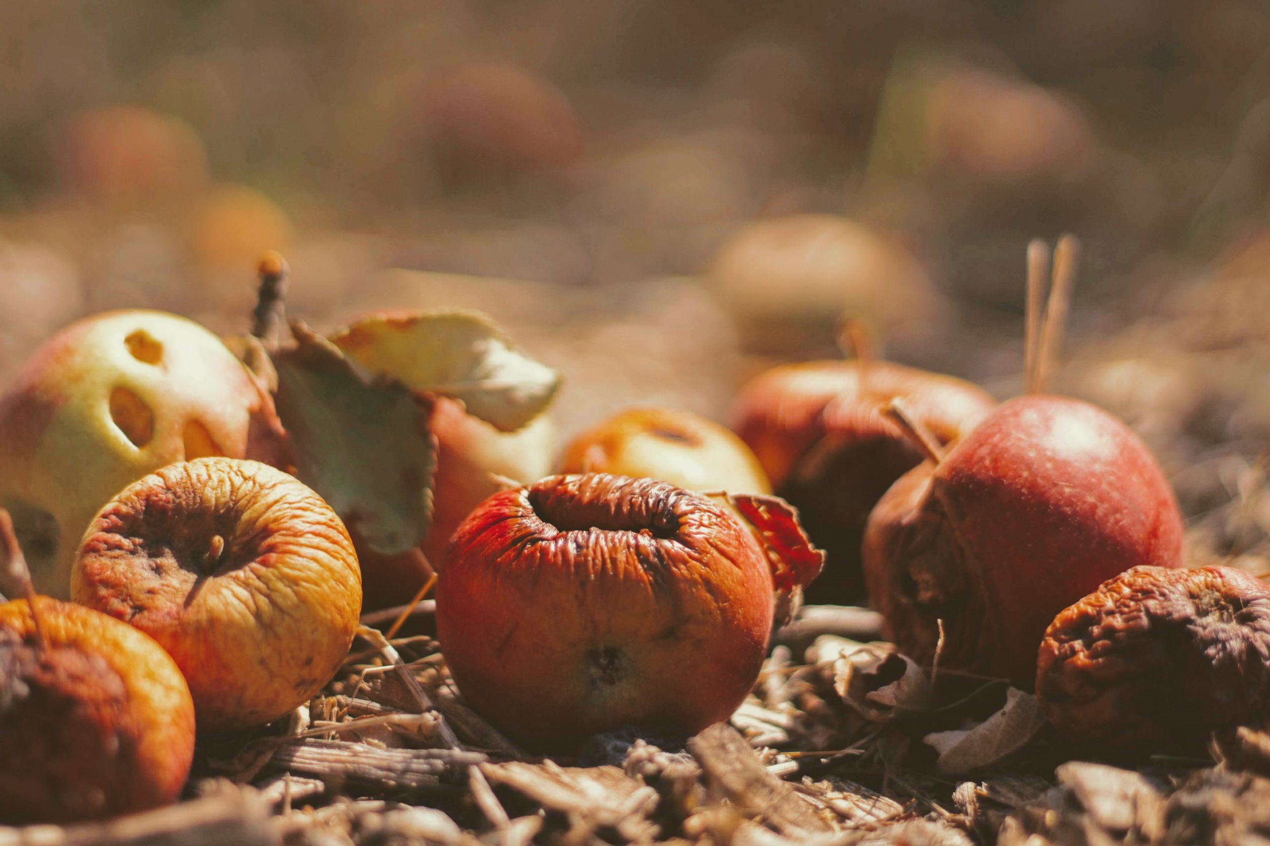 fruta podrida sobre suelo sucio que representa el desperdicio alimentario